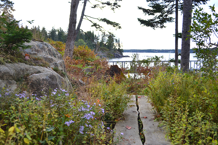 Spruce  Boardwalk Northeast Harbor, ME