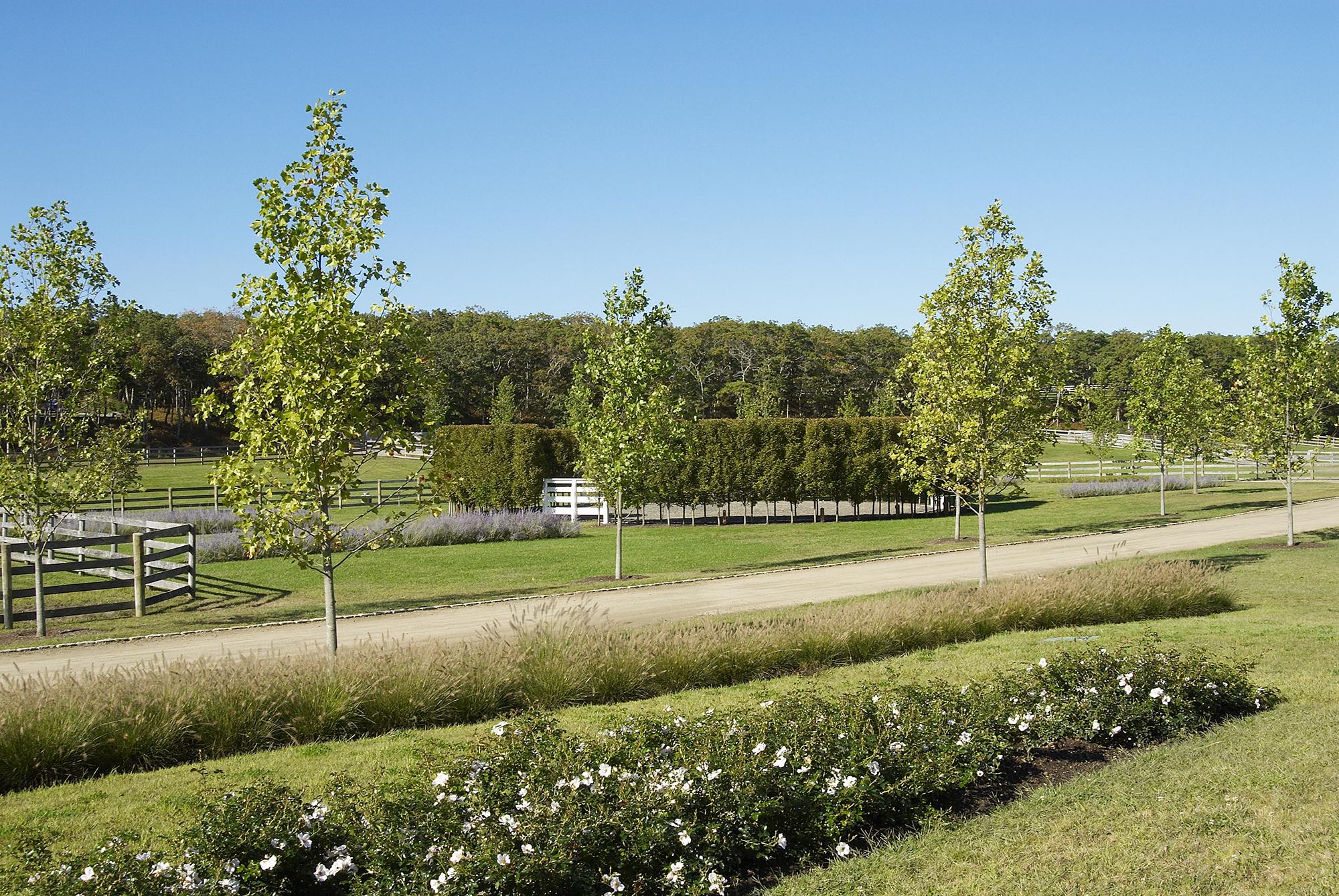 Willow Farm_2.jpg