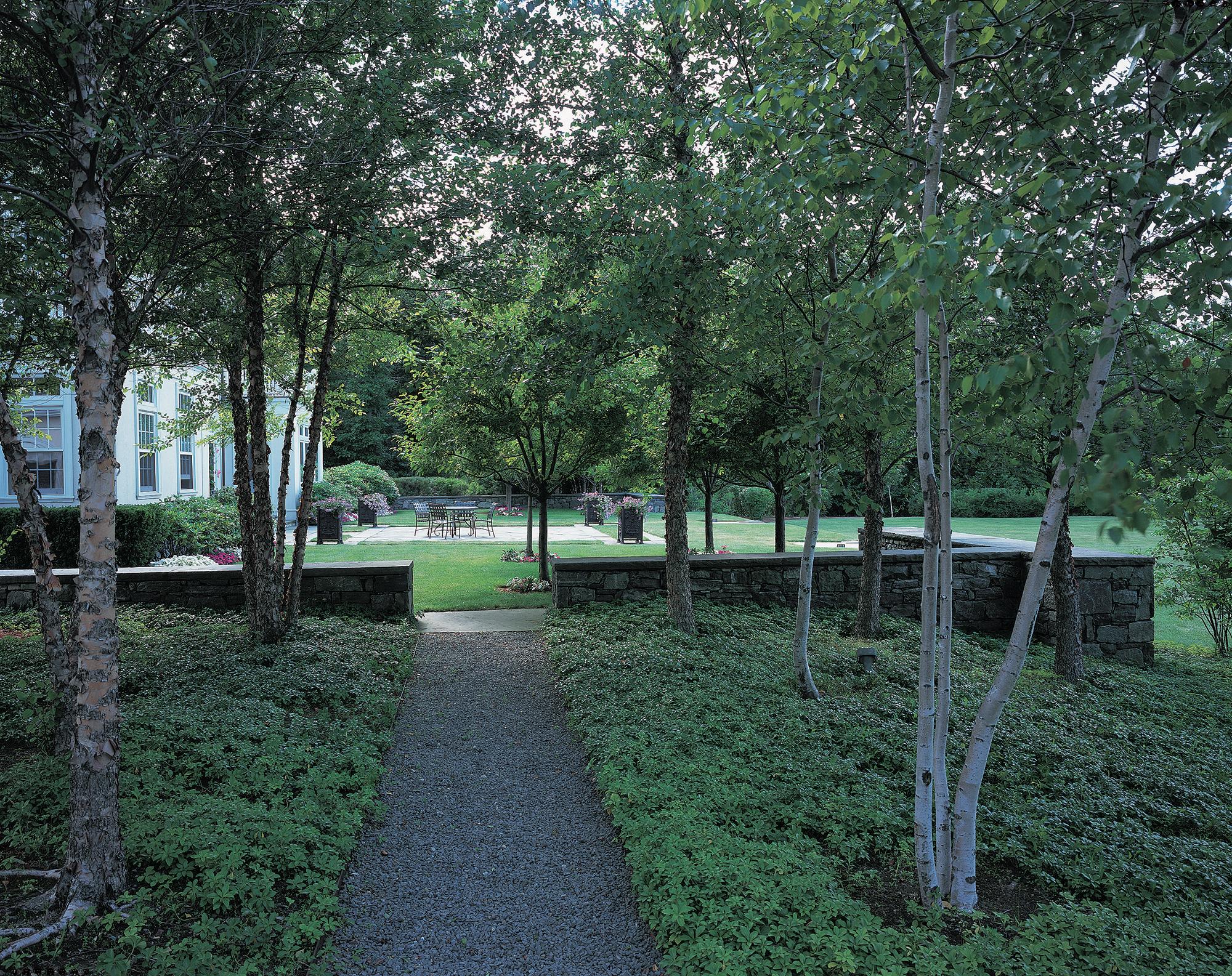Birch Grove  South Shore Landscape ( Ten Landscapes ) Coastal Massachusetts