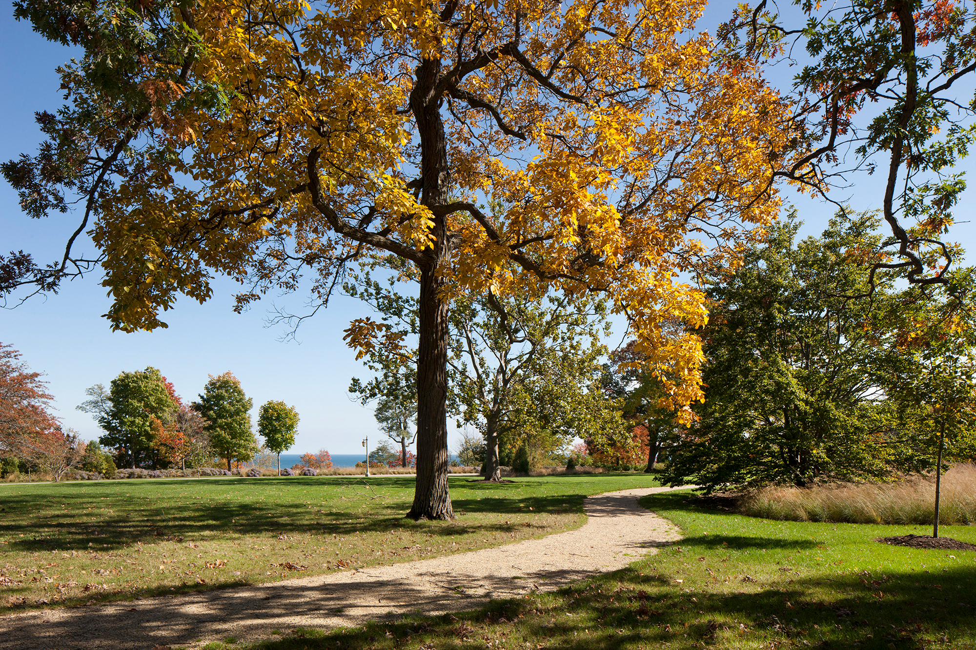 Forest Park 9 SS.jpg