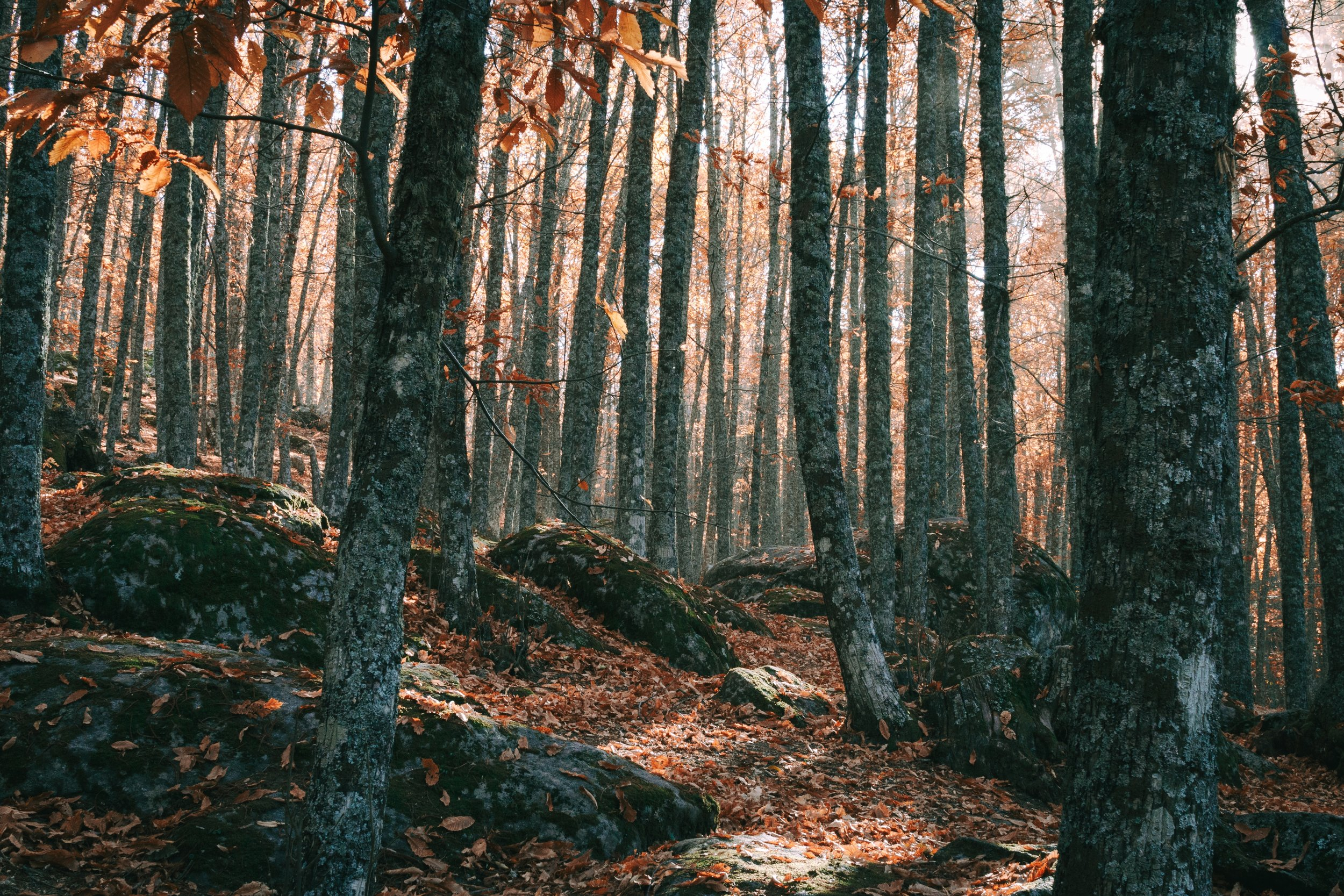 The Ancient Beech Forests - The Forests of Cimini Mountains is one of the most magnificent and impressive woods in central Italy and one of the rarest examples in Europe of