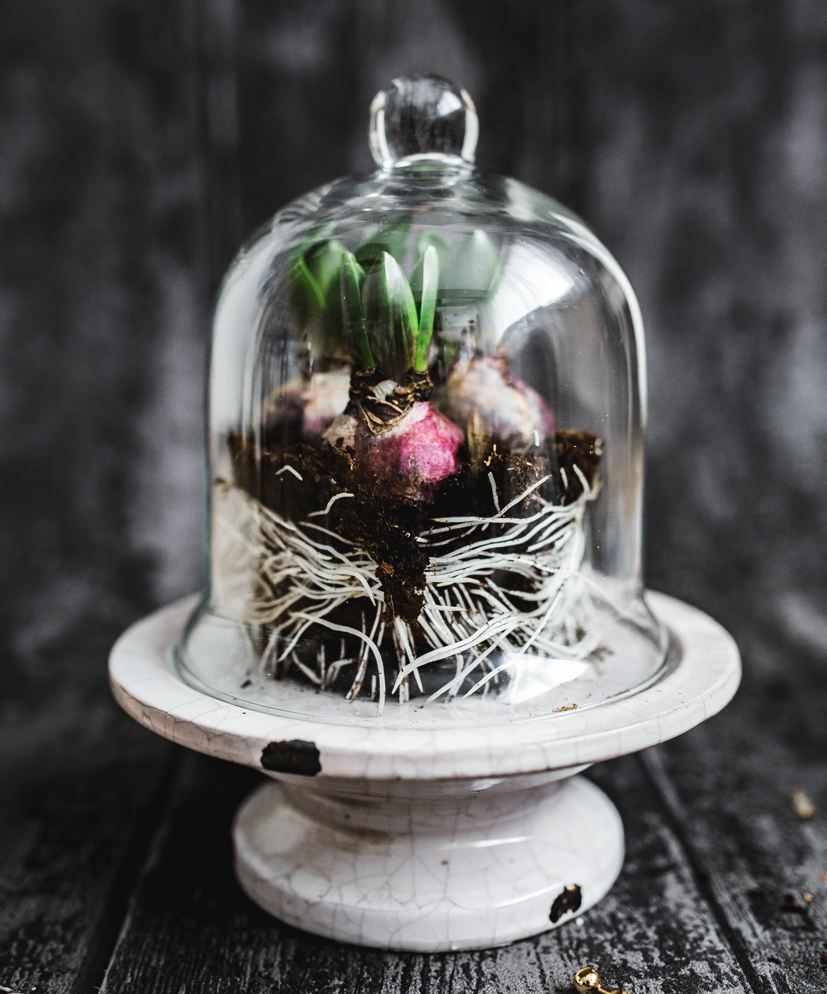 www.JadoreleDecor.com | Crush the Look by Anchoring it With Black | Regardless of your preferred decor style, a little bit of black will raise it to another level