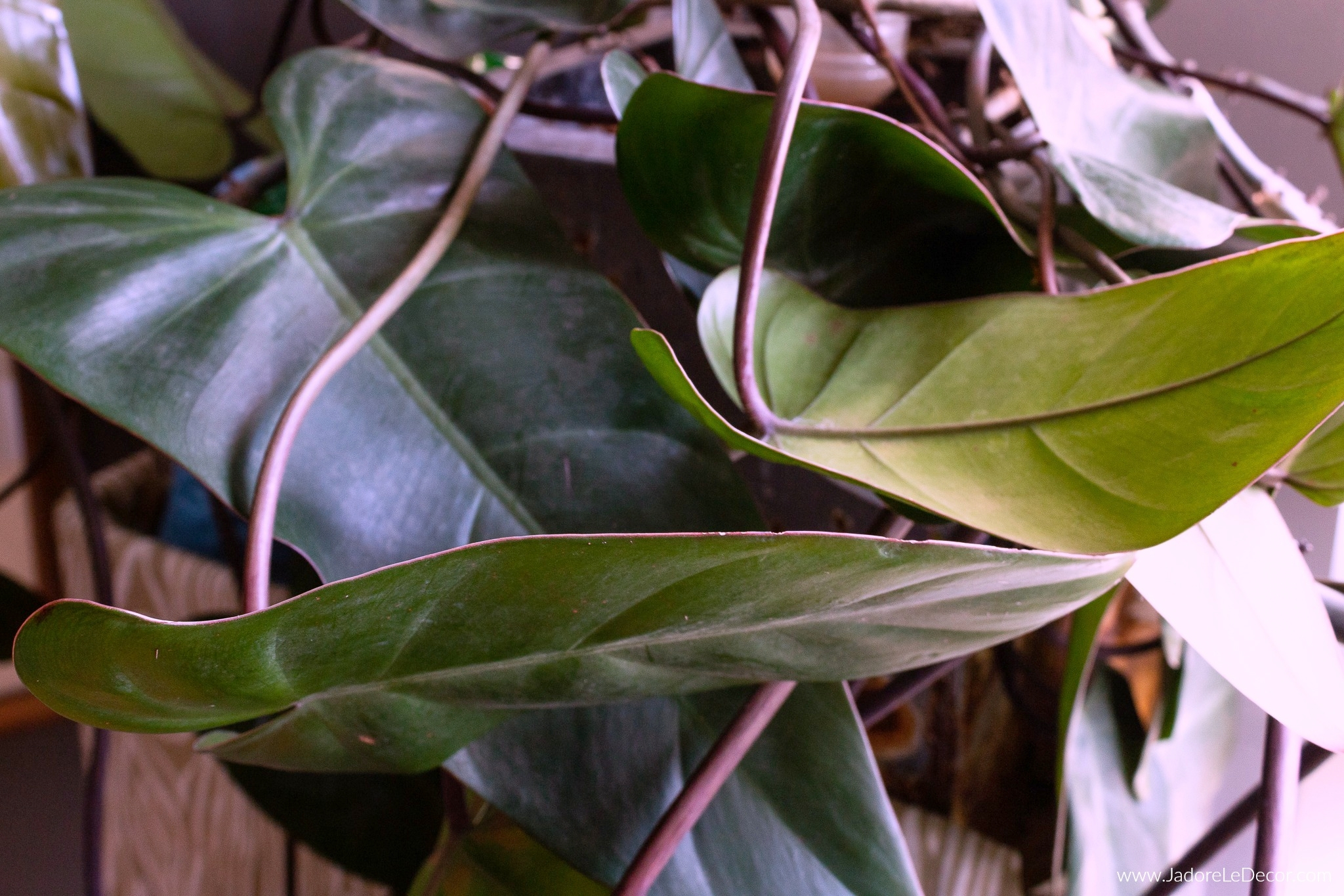 www.JadoreleDecor.com | Proven tips that will help you keep your houseplants thriving.