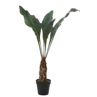 tropical-banana-leaf-plant-in-pot.jpg
