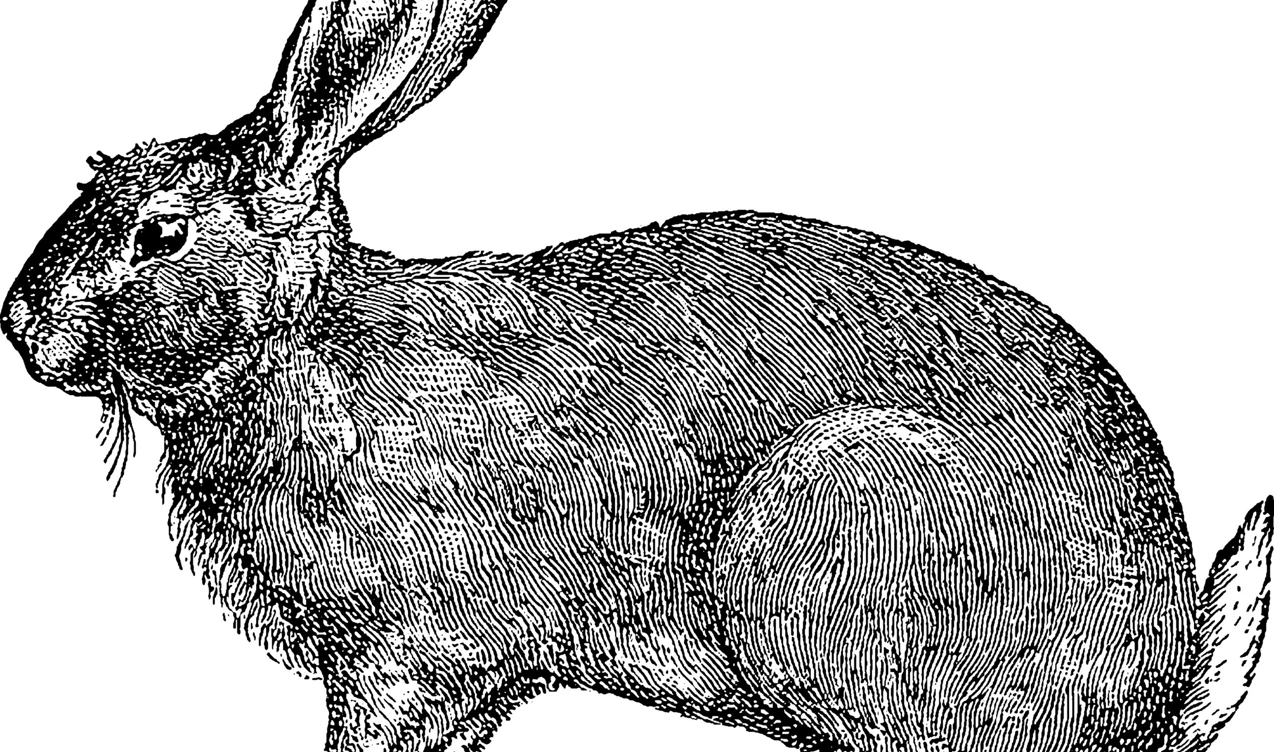 about the hare - we're so glad you're hare