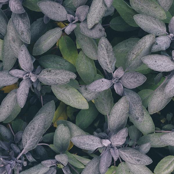 shady-acres-herb-farm-theresa-mieseler-cooking-with-basil.jpg