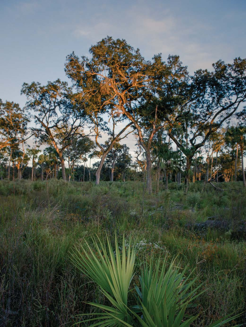 A view from the Silver Springs Forest Conservation Area. CTF helped protect this 4,900-acre property in 2015. It is now owned and managed by the St. Johns River Water Management District. Photo by Carlton Ward Jr.