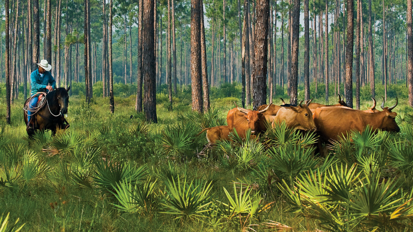 Our mission is to protect Florida's natural and agricultural landscapes. It is our hope that protected lands will form a statewide conservation corridor,support the success of working family farms and ranches, and contribute to a healthy economy.  Photo by Carlton Ward.