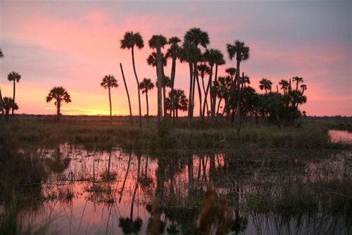 """Designated one of """"Florida's Special Places,"""" the  West Volusia Audubon Society  offers guided walks at Lake Woodruff on Sundays in the winter. Photo by the Florida Audubon Society."""