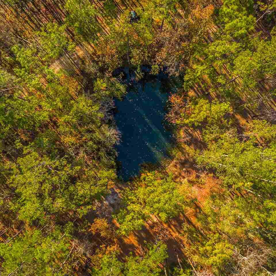 Wakulla Springs Protection Zone - Over 1,000 acres within the protection zone. Photo courtesy of John Ferrell.