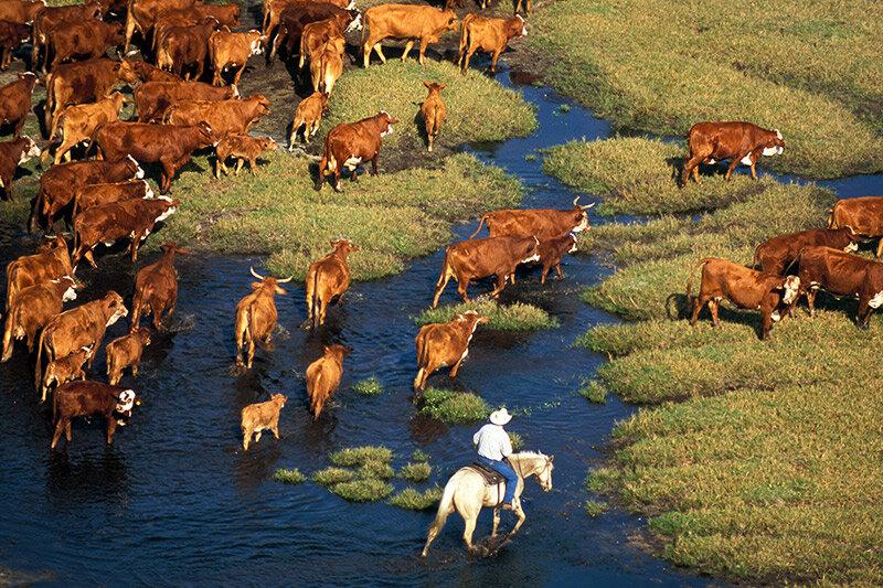 Photo of Adams Ranchlands in Lake Okeechobee by Carlton Ward, Jr.