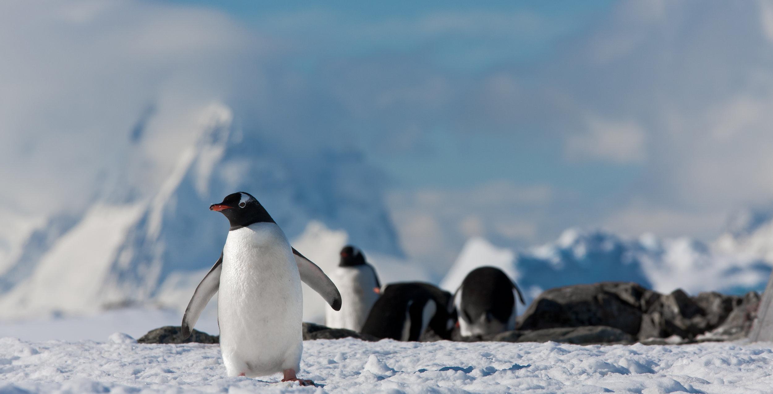 penguins-in-antarctica-PC4M6X3.jpg