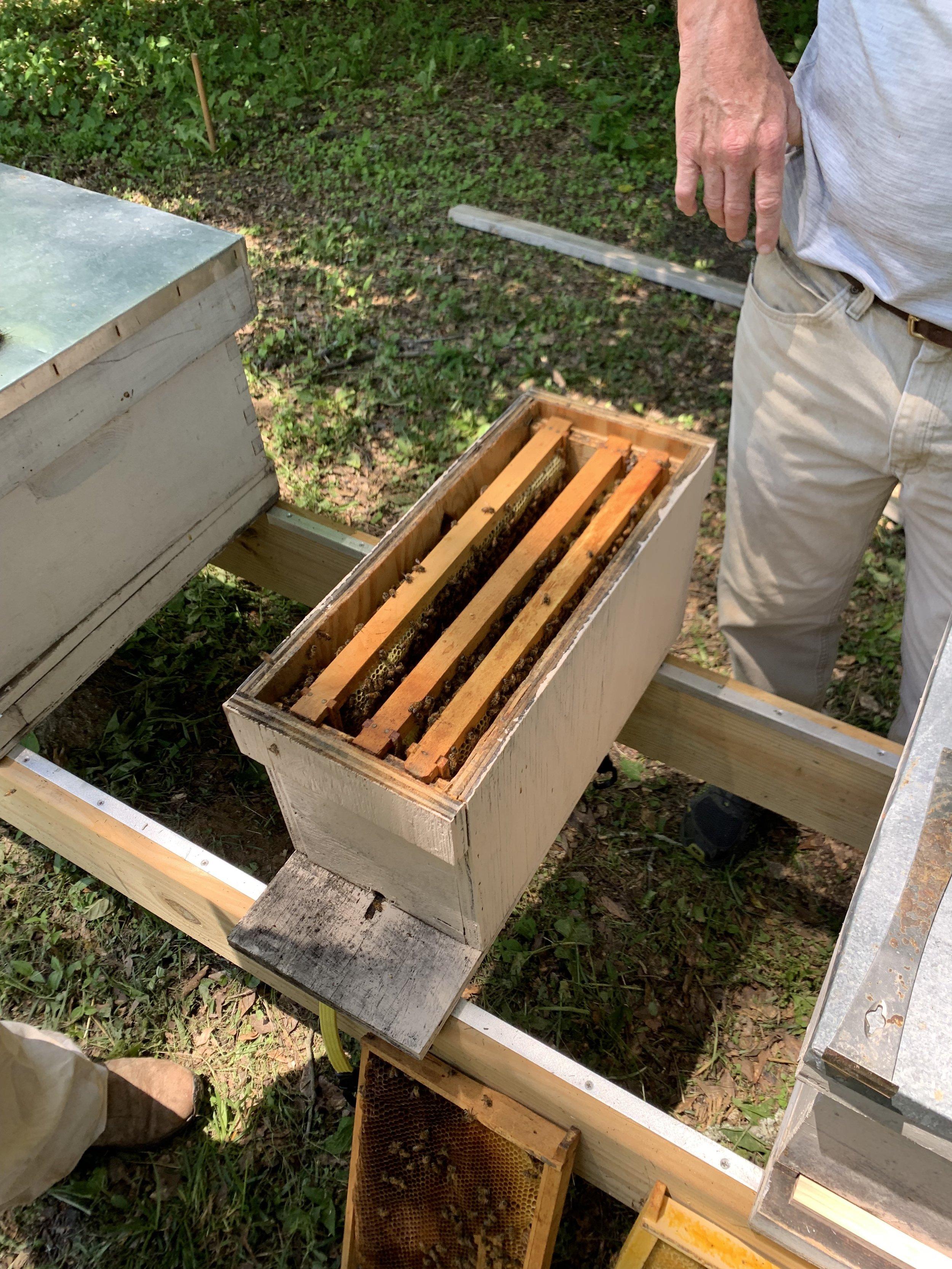 SSE Bees 2.JPG
