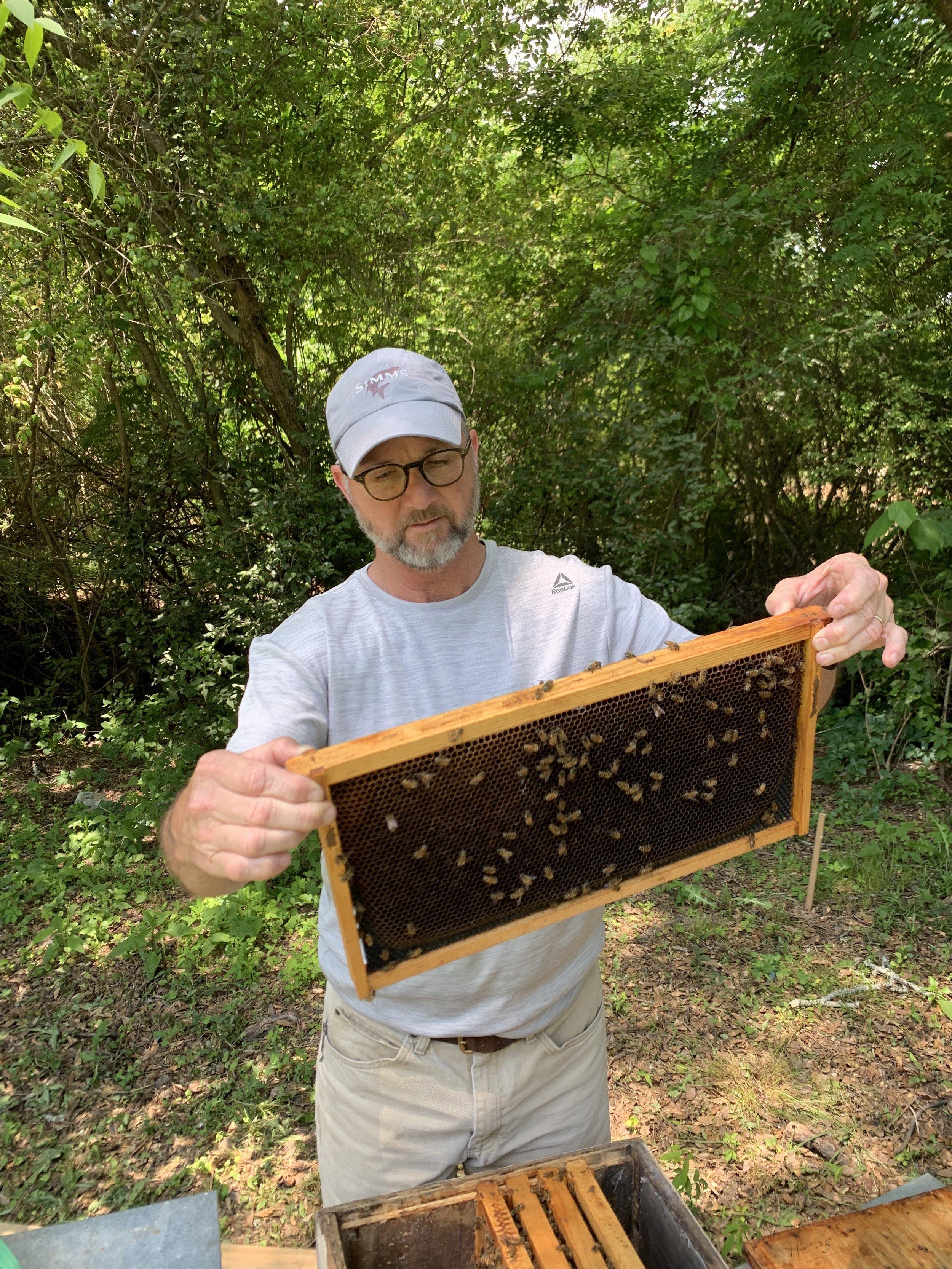 SSE Bees 3.JPG