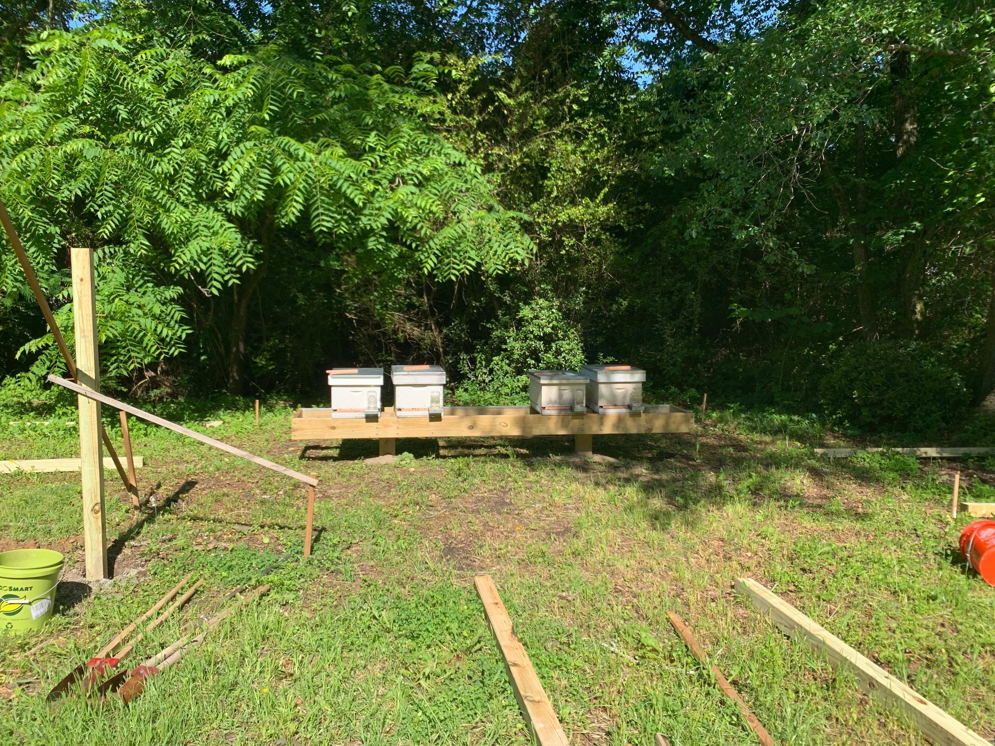 SSE Bees 5.jpg