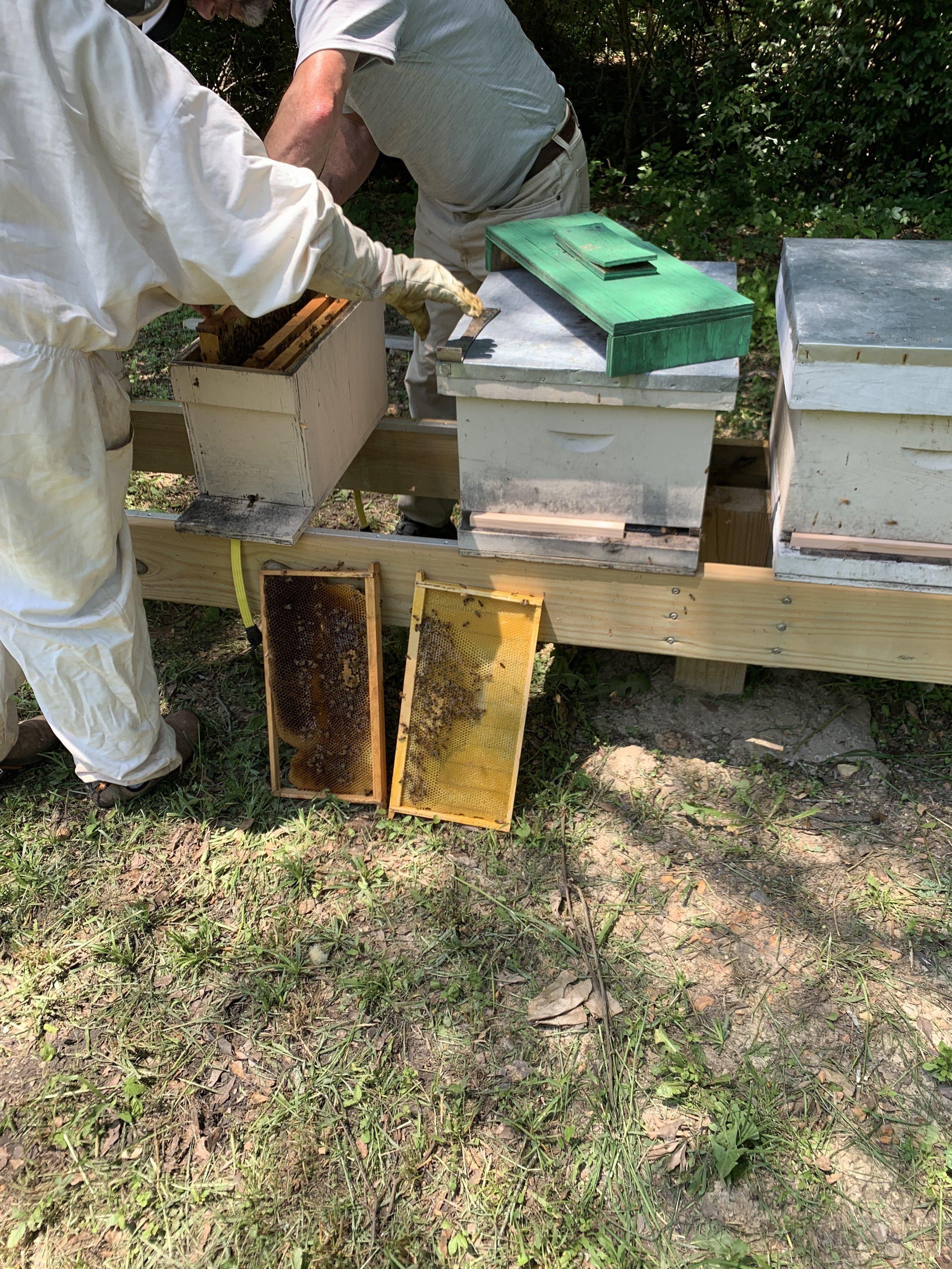 SSE Bees 4.JPG