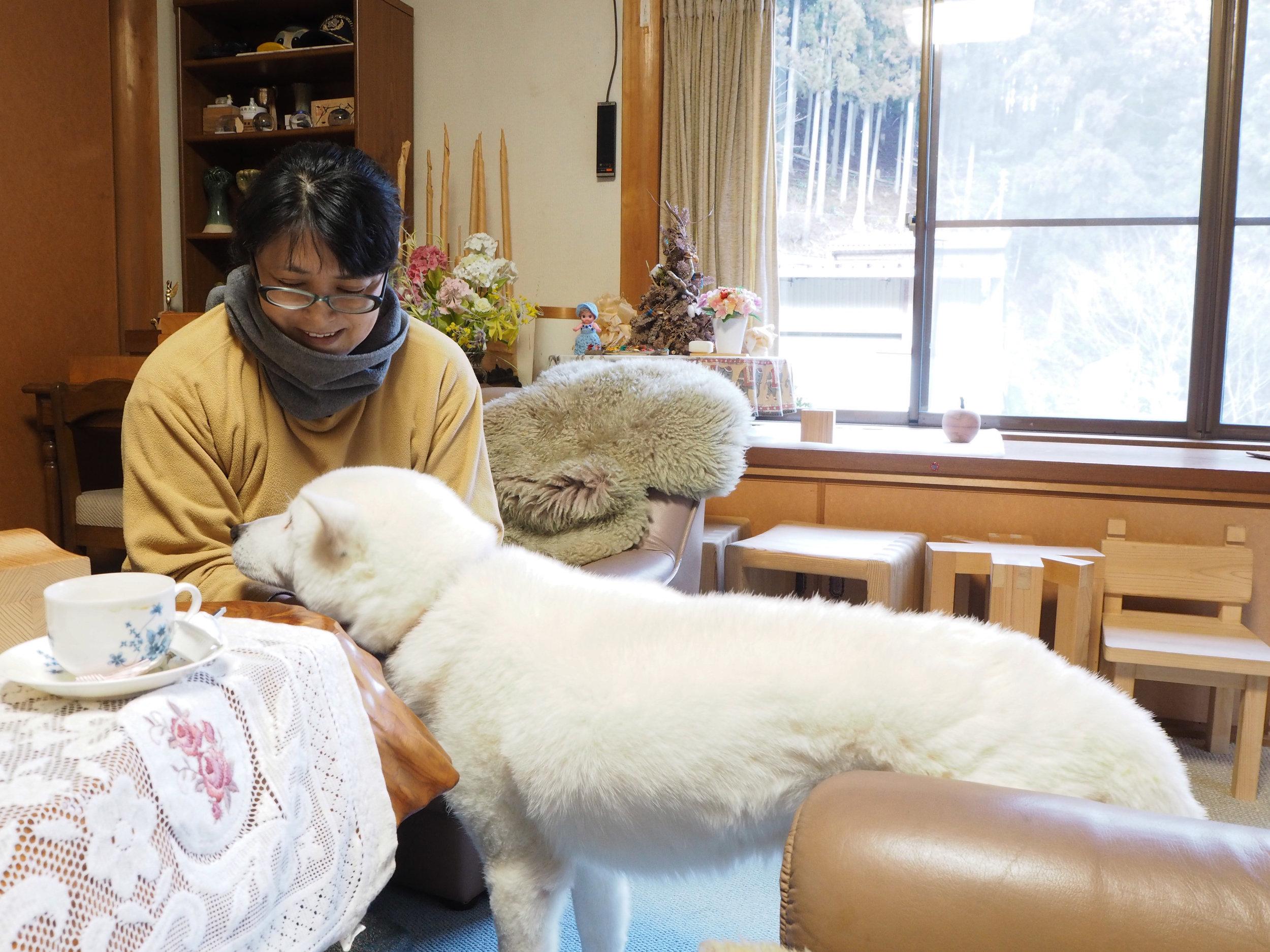 白い犬1.jpg
