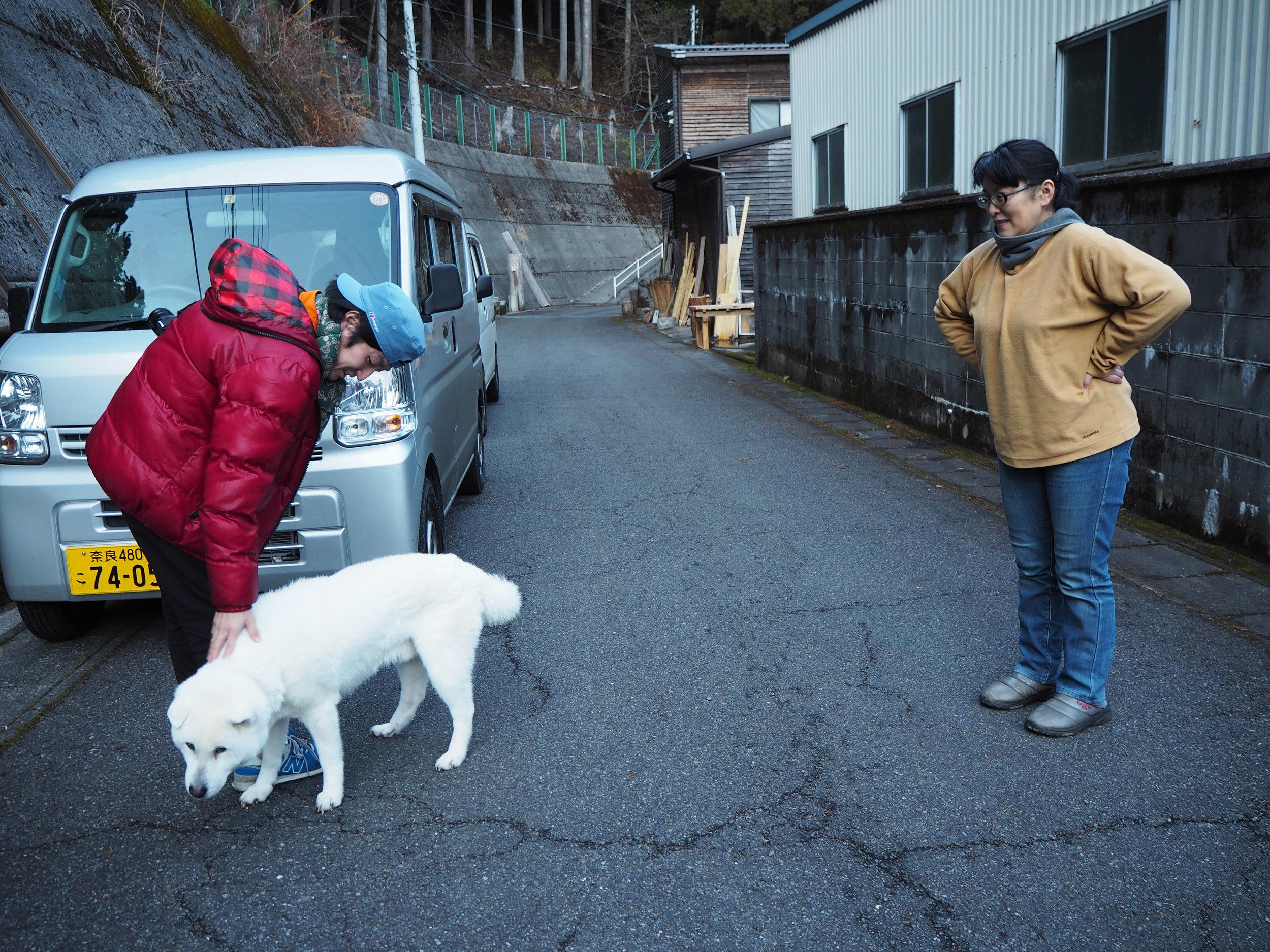 白い犬8.jpg