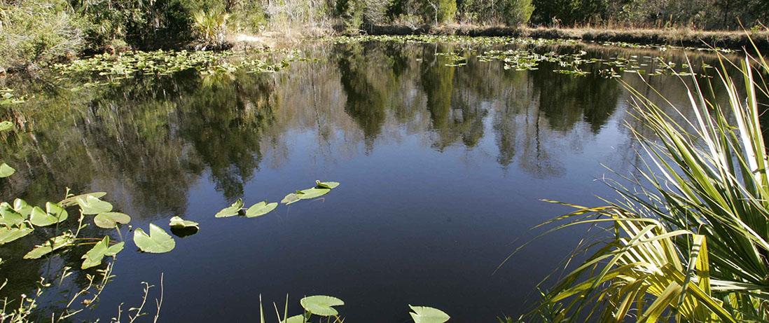 Aquatic_environment_swamp_water_landscape-1098x461.jpg