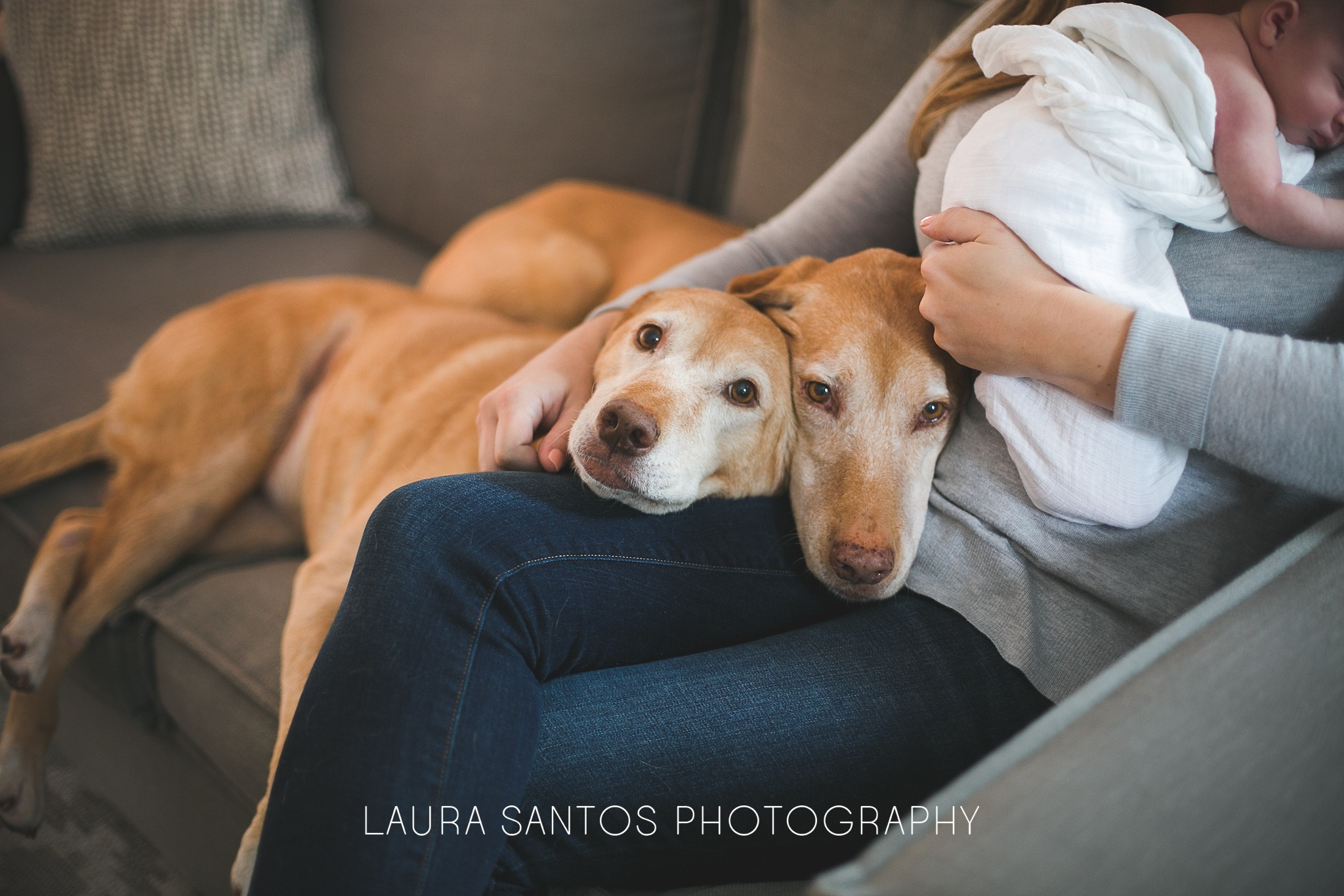 Laura Santos Photography Portland Oregon Family Photographer_0190.jpg