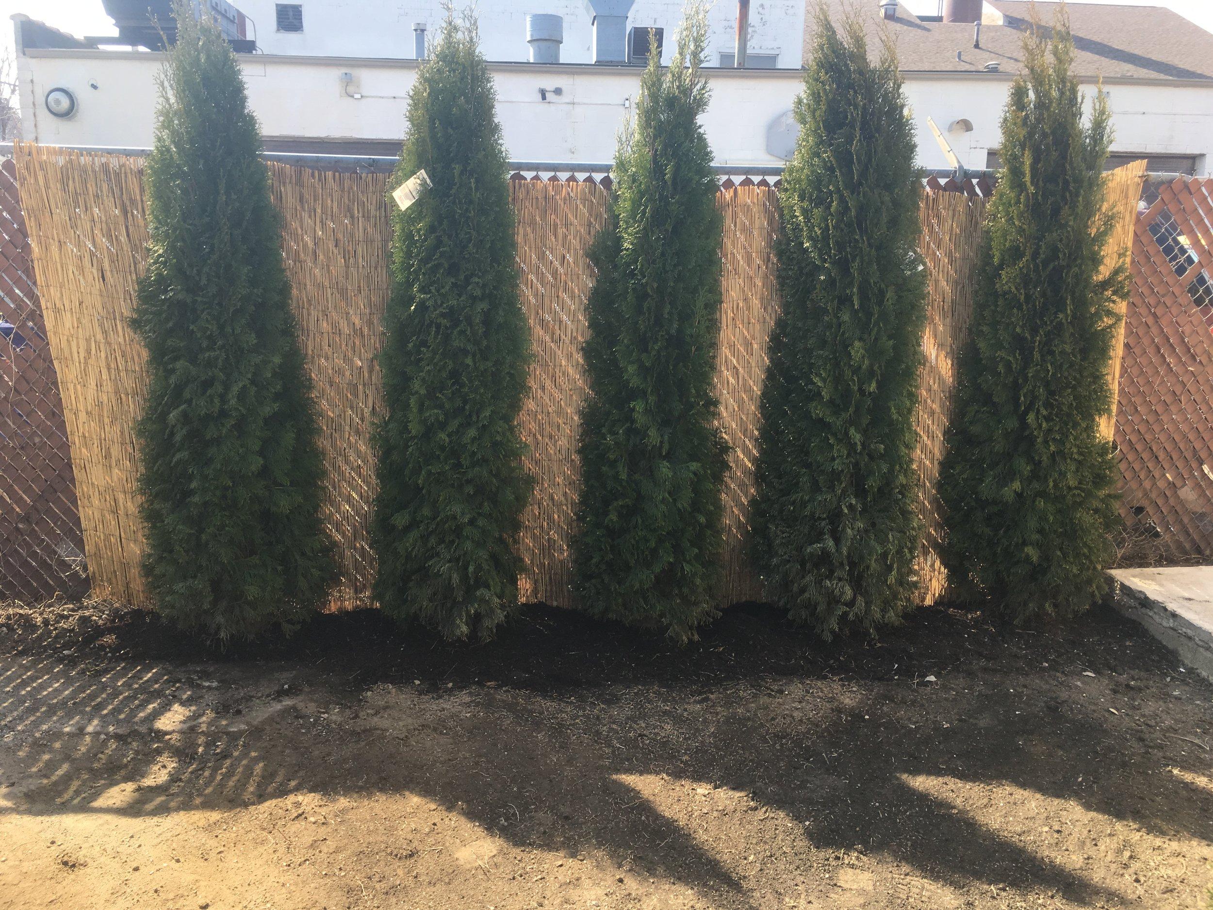 IMG_4553 TREES.JPG