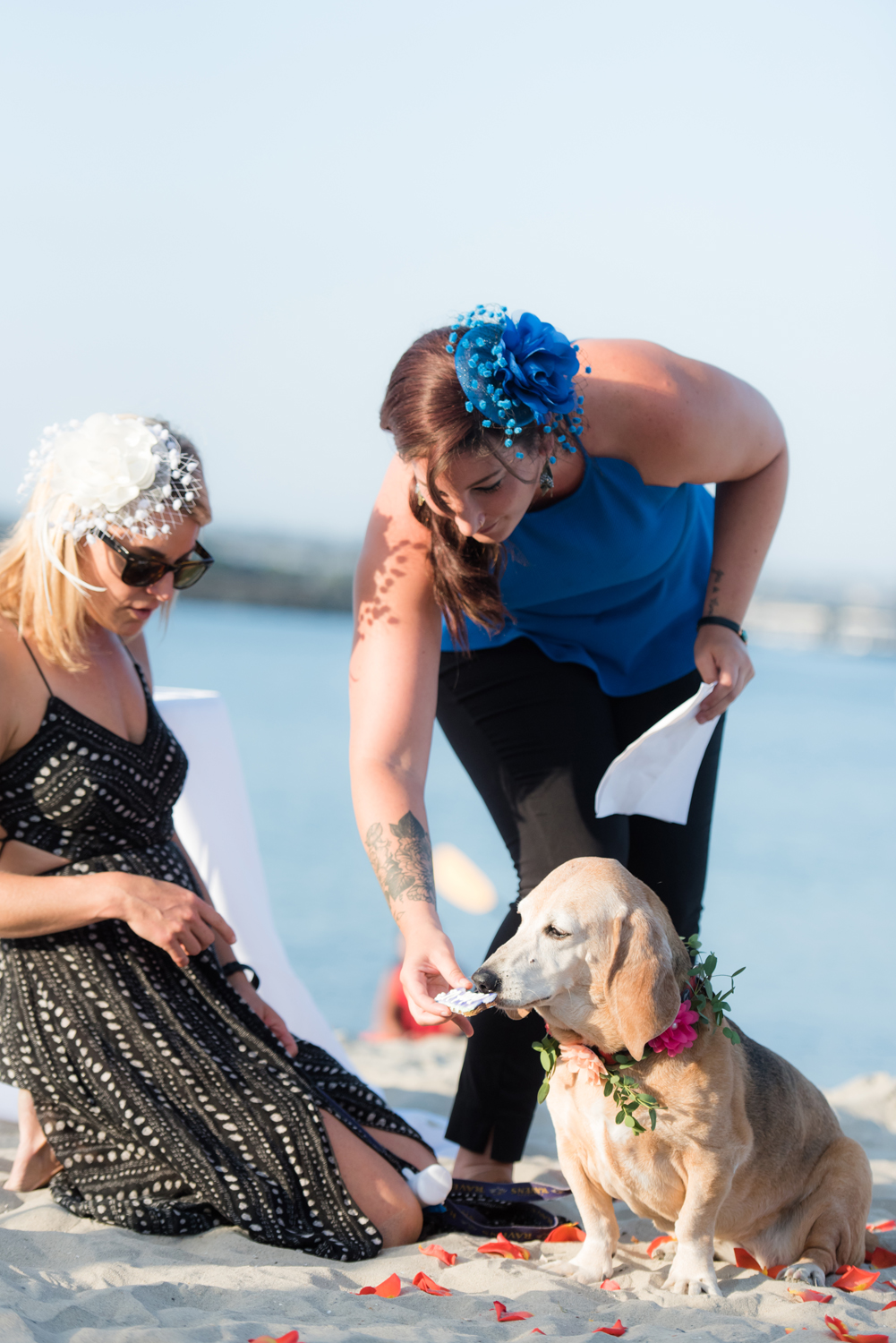 Blog_SeniorTails_JakeBagelWedding013.jpg