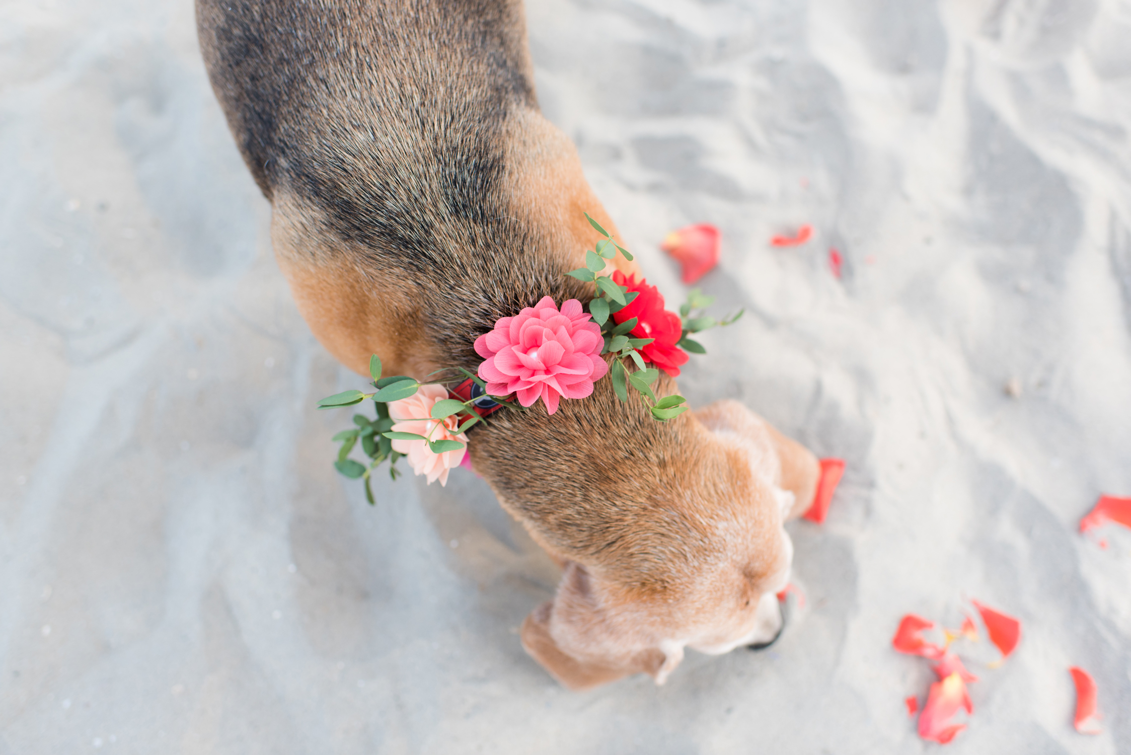 Blog_SeniorTails_JakeBagelWedding020.jpg