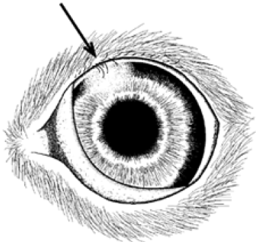 Eyelashes can be seen in the top lid.