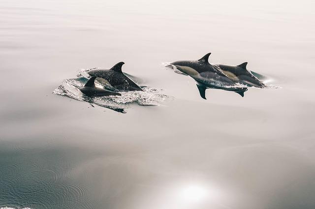dolphins-945410_640.jpg
