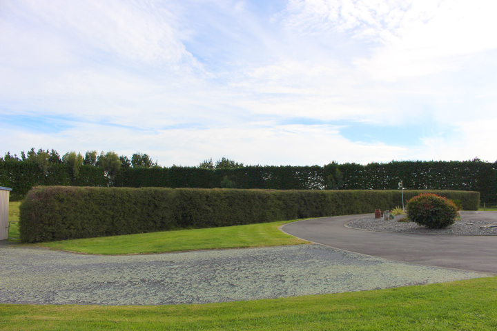 The 'after' image - a neatly trimmed and shaped hedge.