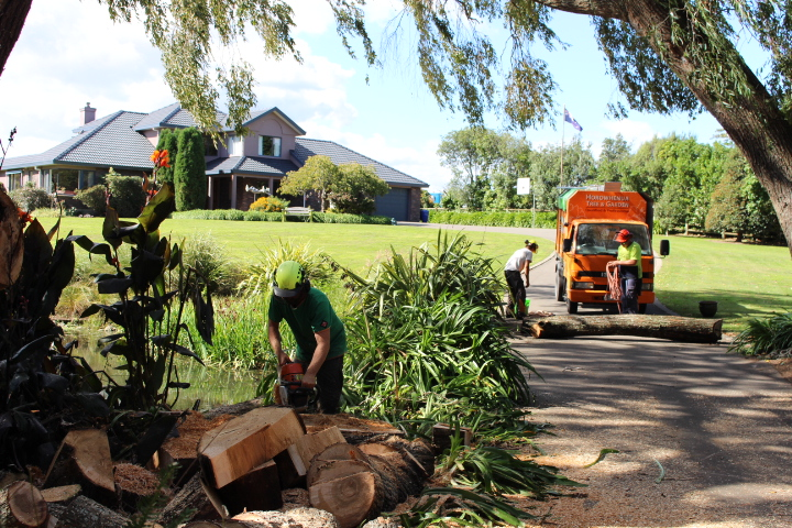 Our tree felling crew making short work of a rotten tree that had to come down.