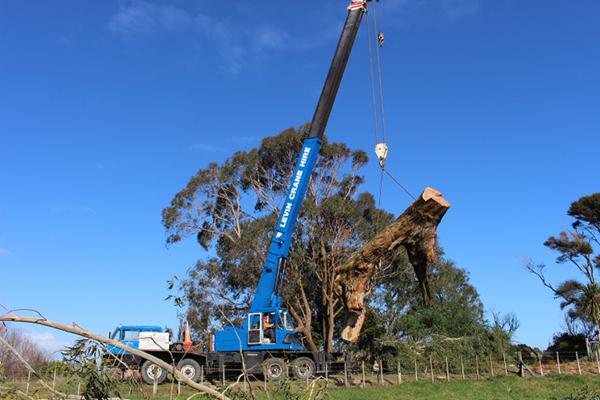 Tree-removal-with-crane-Ohau.jpg