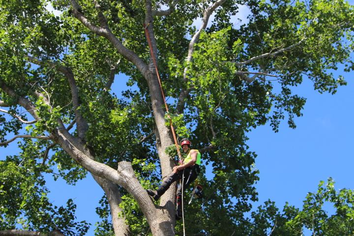 Professional tree services Horowhenua