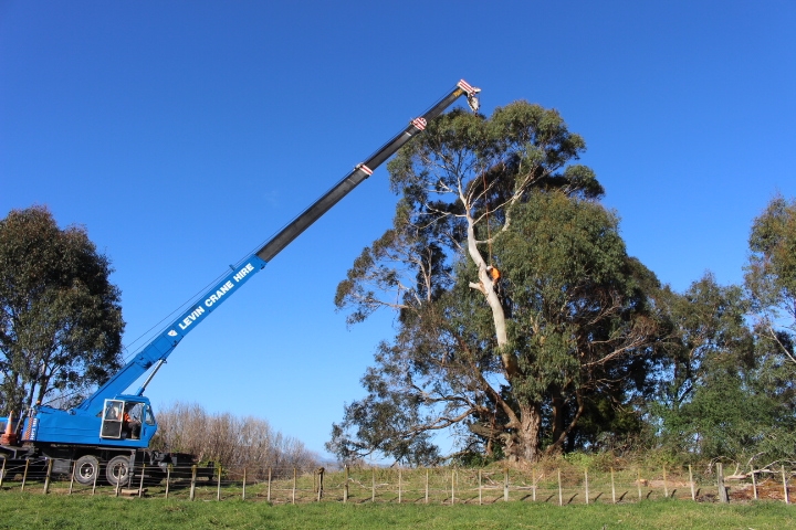 Tree removal services Levin and Foxton