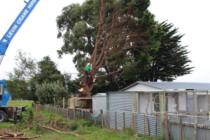 Arboriculture tree services Waikawa