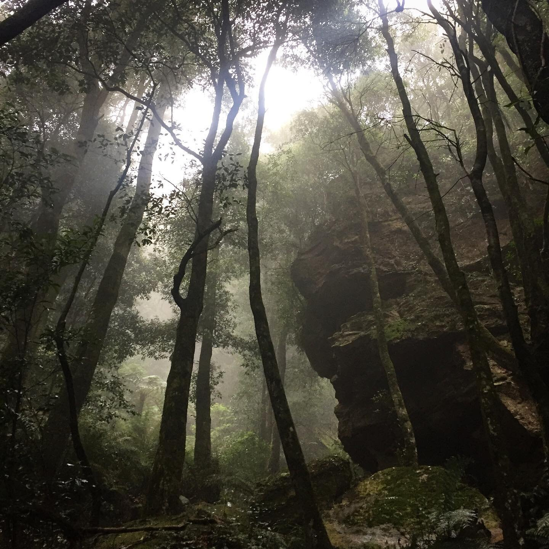 The beautiful Blue Mountains 😍😍 misty days are the best times to go 😊🦖 . . . . . . . .  #bushwalking #sydney #seeaustralia #sydneyhikes #adventure #nature #hike #serenity #bluemountains #summer #australia #travelaustralia #hikingadventures #nswnationalparks #npws #aussiebush #naturelovers #bushfitness #visitnsw #bushwalkingnsw #greatoutdoors #bushwalkingadventures #natureswonders #aussiehotspots #tourismnsw