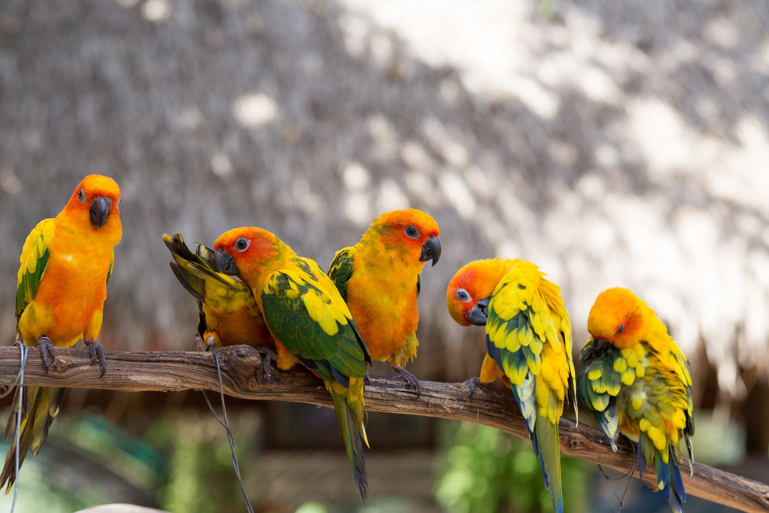 Caged & Aviary