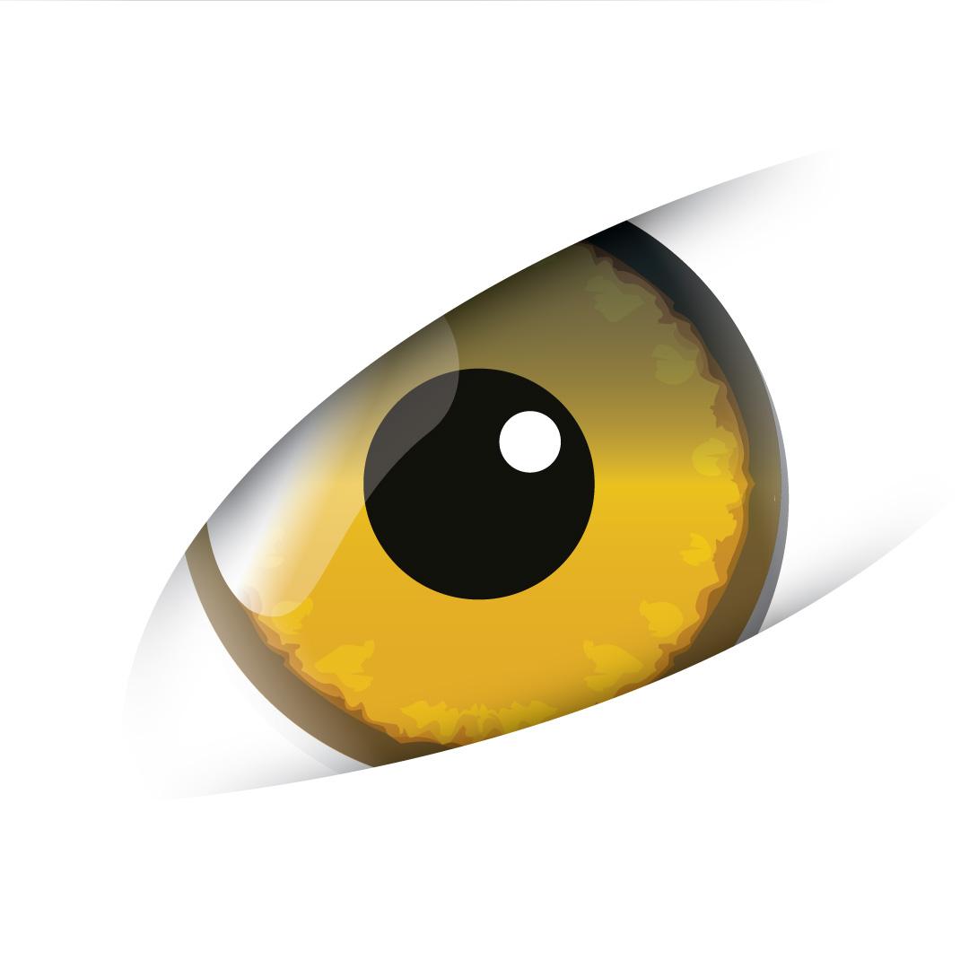 eye_def3.jpg
