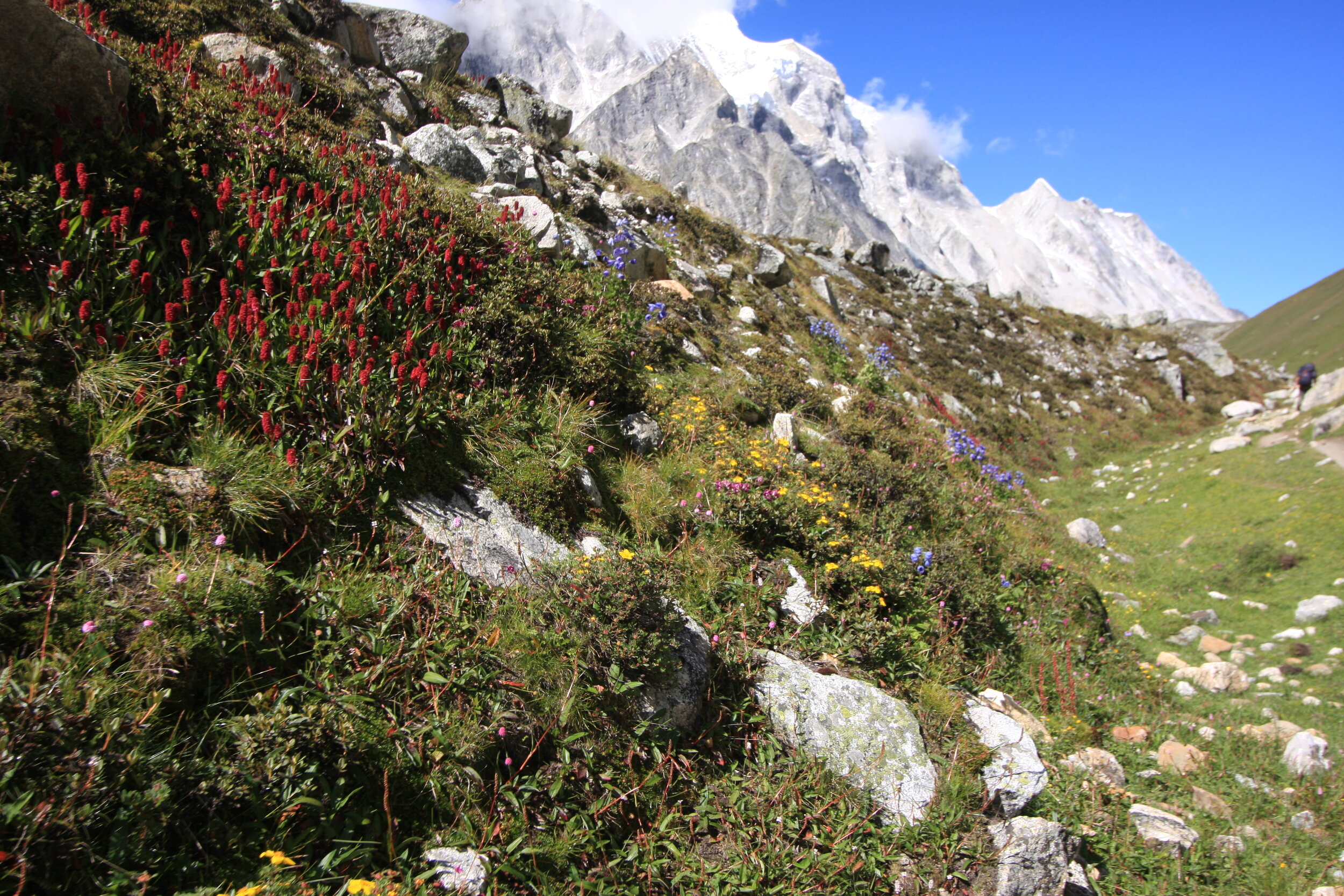 Absolutely peaceful soul cleansing expedition inbetween the plants and the mighty mountain Manaslu.  AUGUST 2019