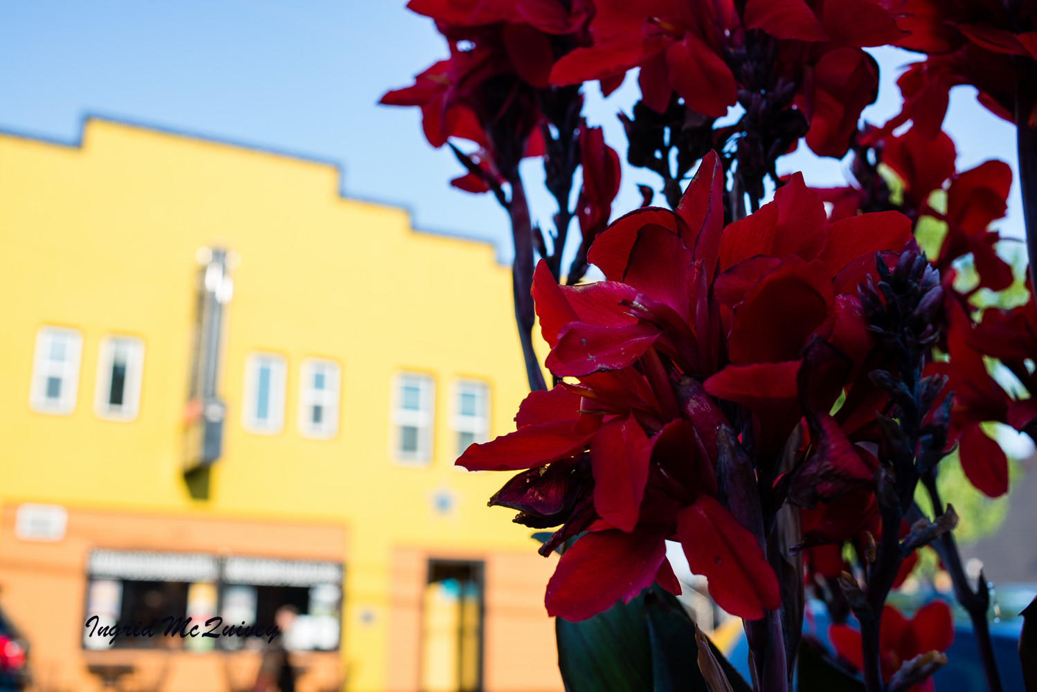 THE OLD LIBERTY THEATER IS THE YELLOW BUILDING BEYOND THE FLOWERS.