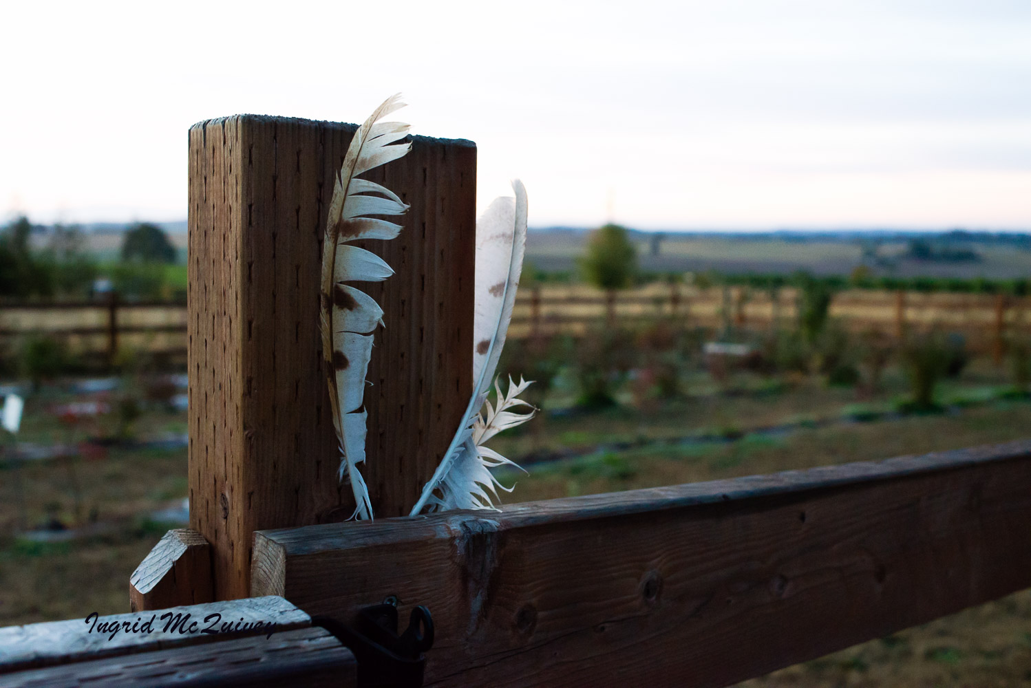 bird feathers - When Trish and I stayed at Blueberry Garden Cottage, we found a feather on our walk and left it inside the cottage. When Dave and I returned, there were several feathers stuck in the fence near the cottage's entrance.