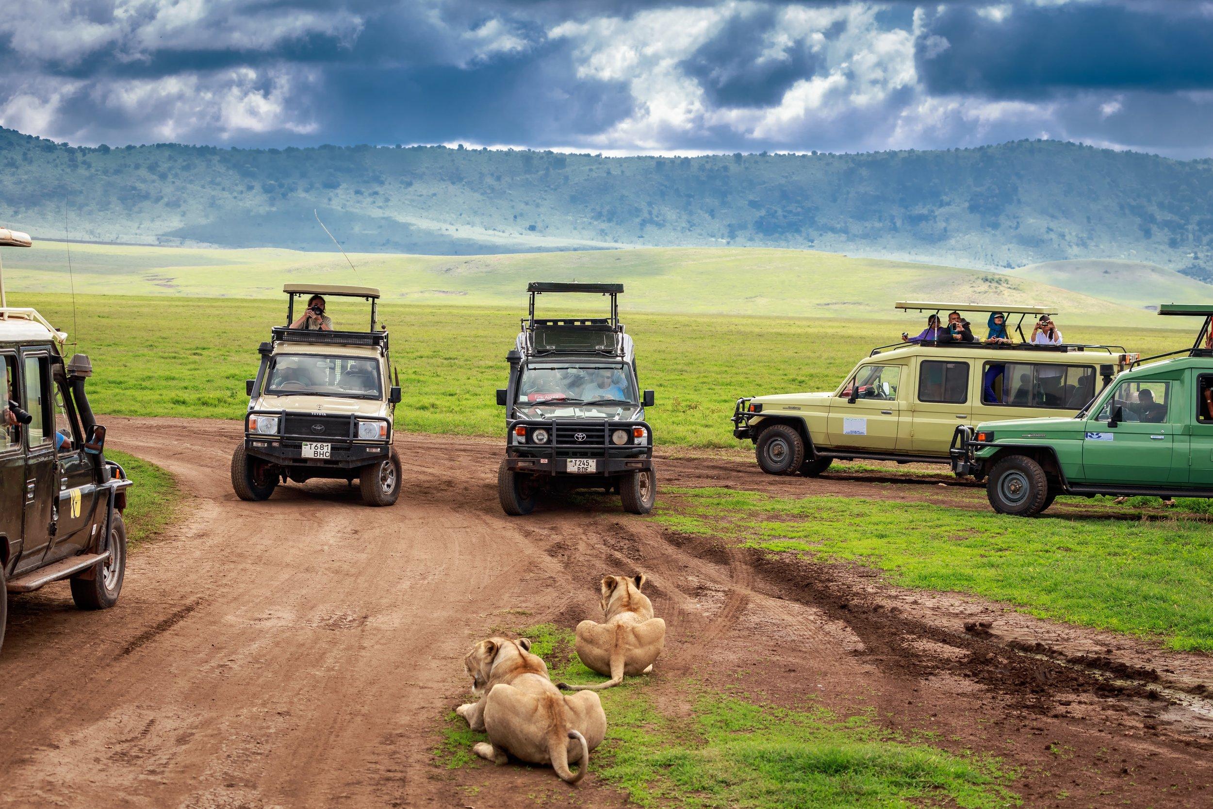 Photo credit: Kanokrat Tawokhat & Above Safaris