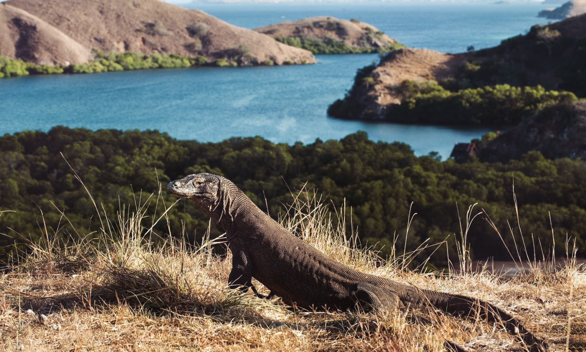 Waved to the Komodo Dragons.