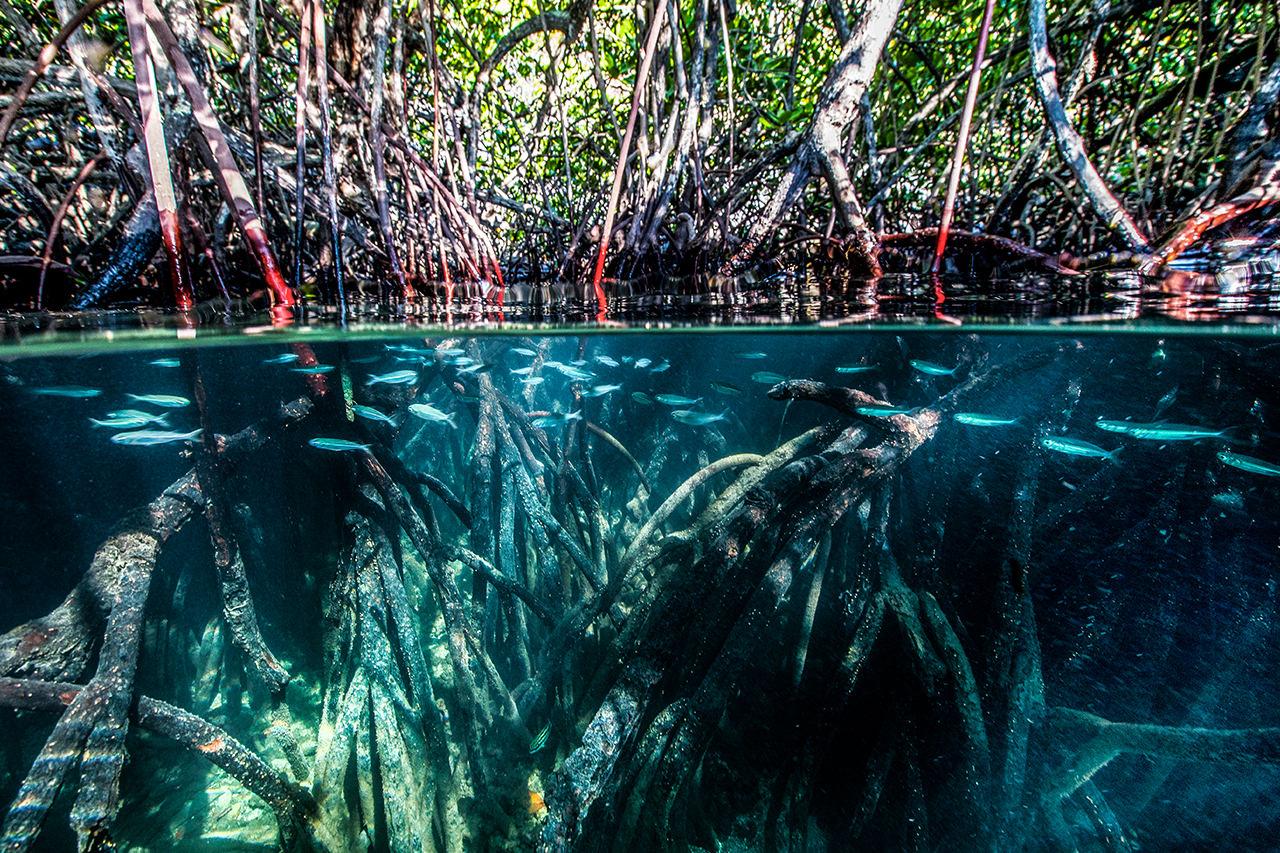 4_mangroves.jpg