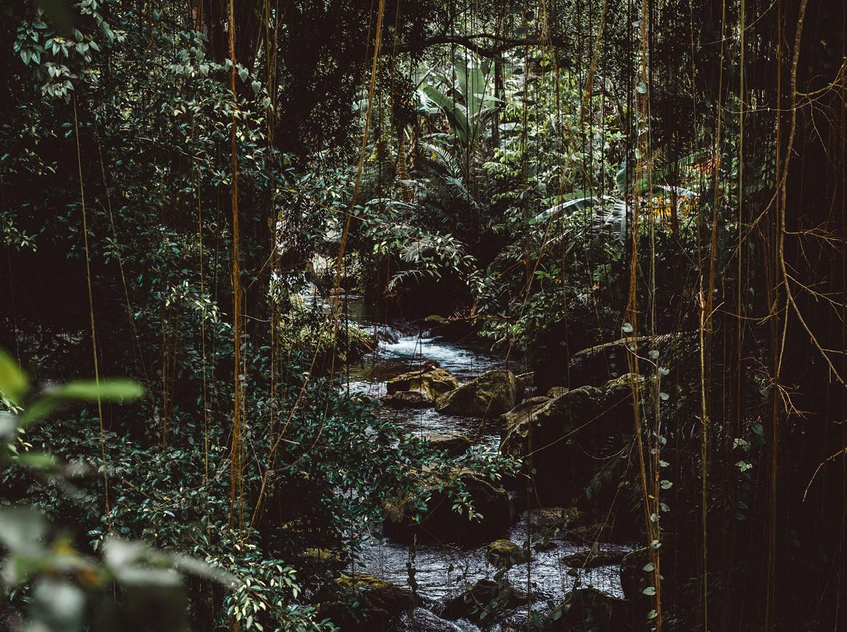 7_forest.jpg