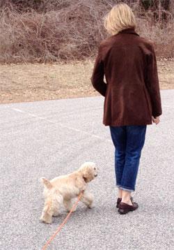 Tips-n-Tricks — My Dogs Mind