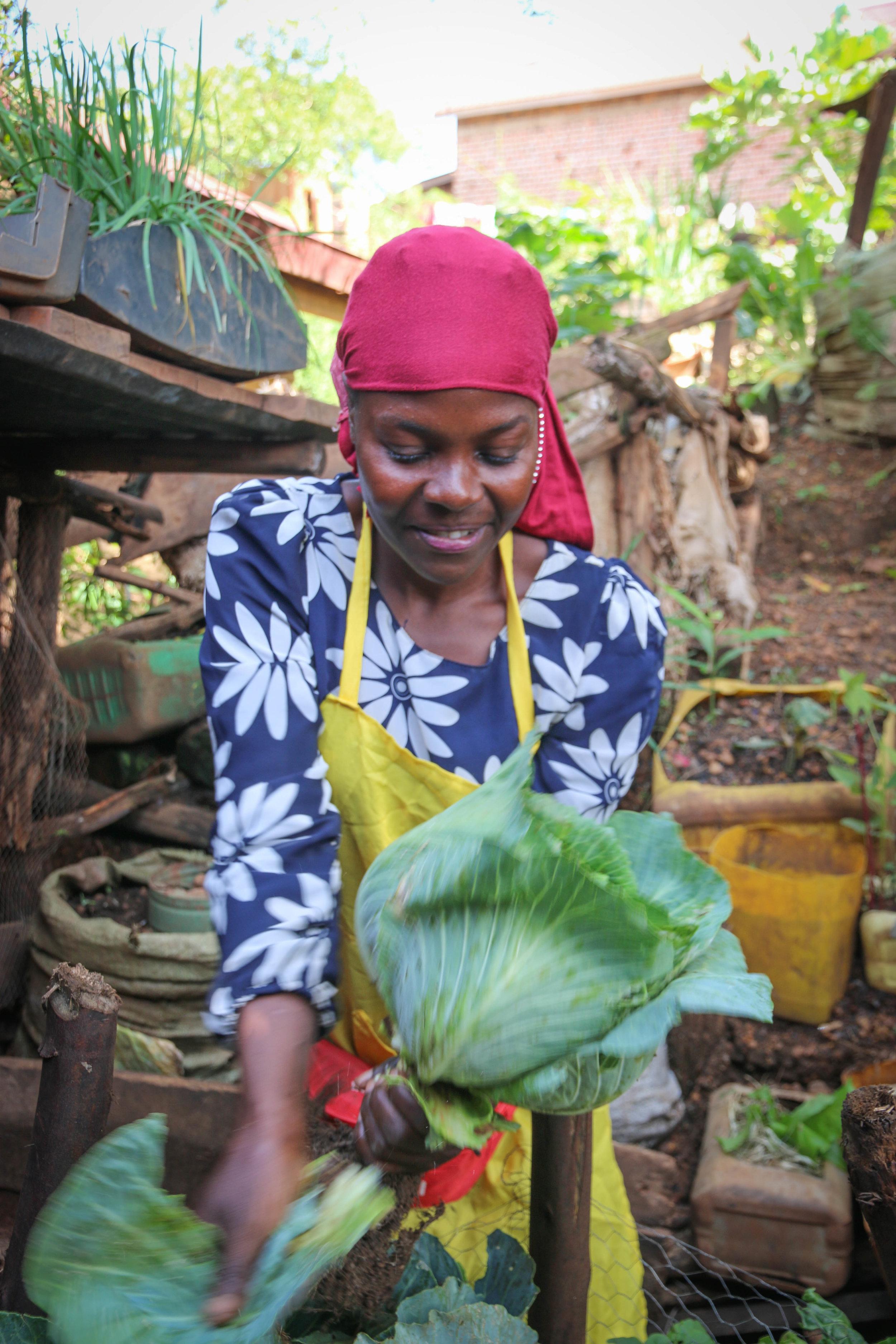 2016 - 21365 Uganda-Zachedo- Cabbage grown in a bag (1).jpg