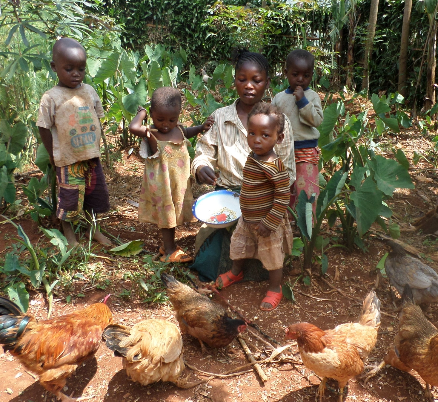 MY 1601 DRC 2016-19 mom with kids and chickens.JPG
