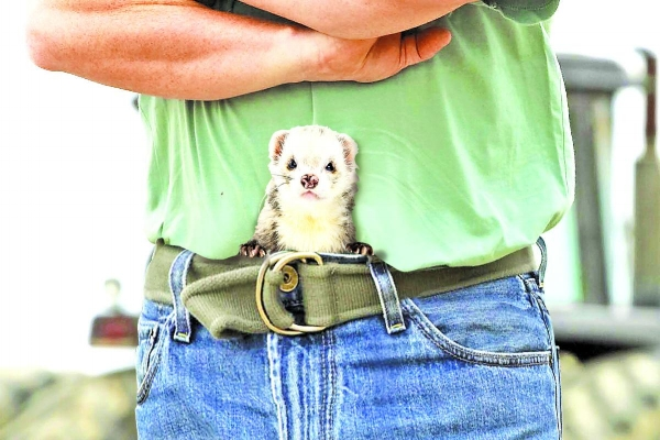 Hostile looking man with a shifty looking ferret down his trousers.