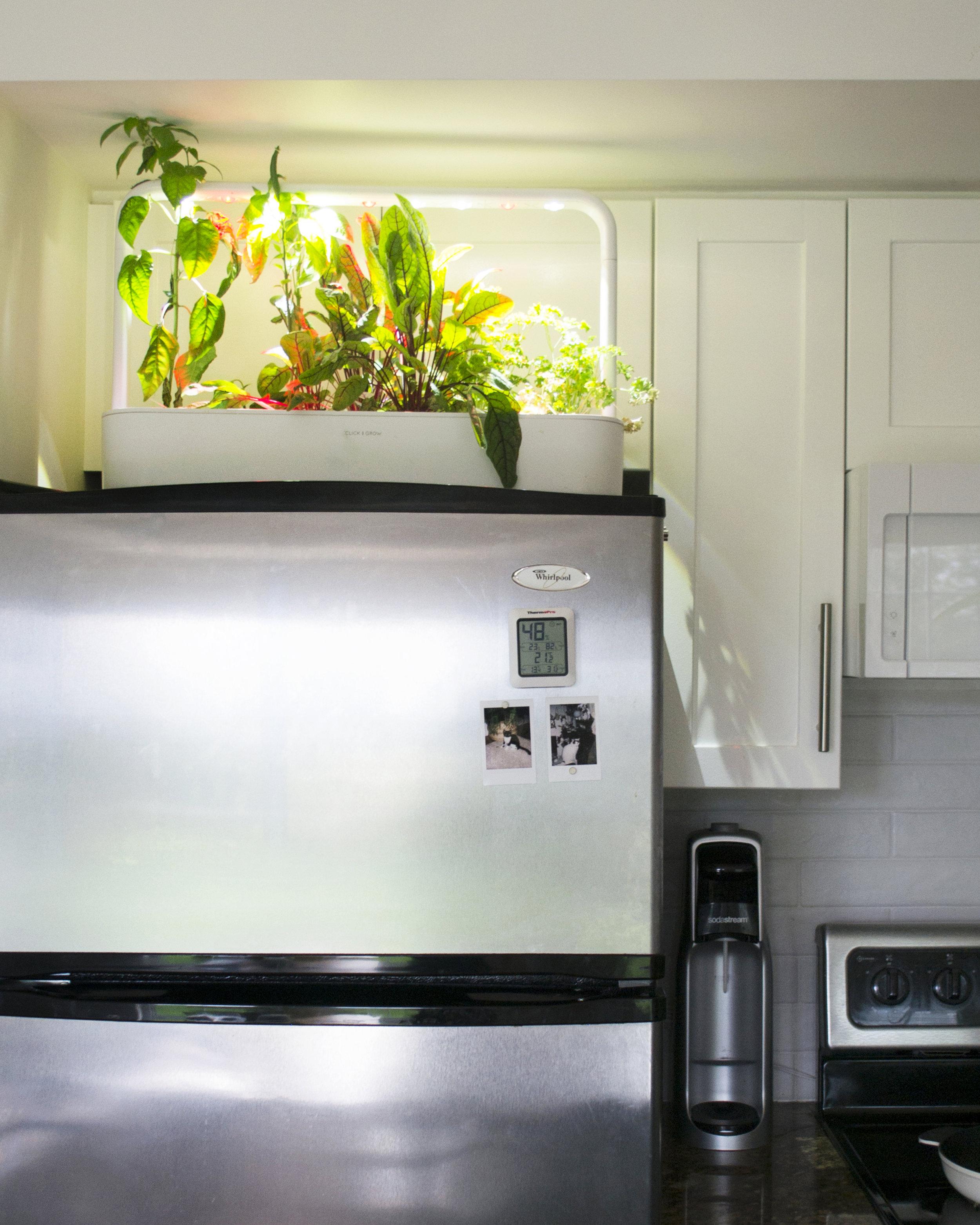 Click & Grow   Smart Garden 9 , slightly overgrown